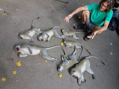 Monkeys Poisoned in Durban