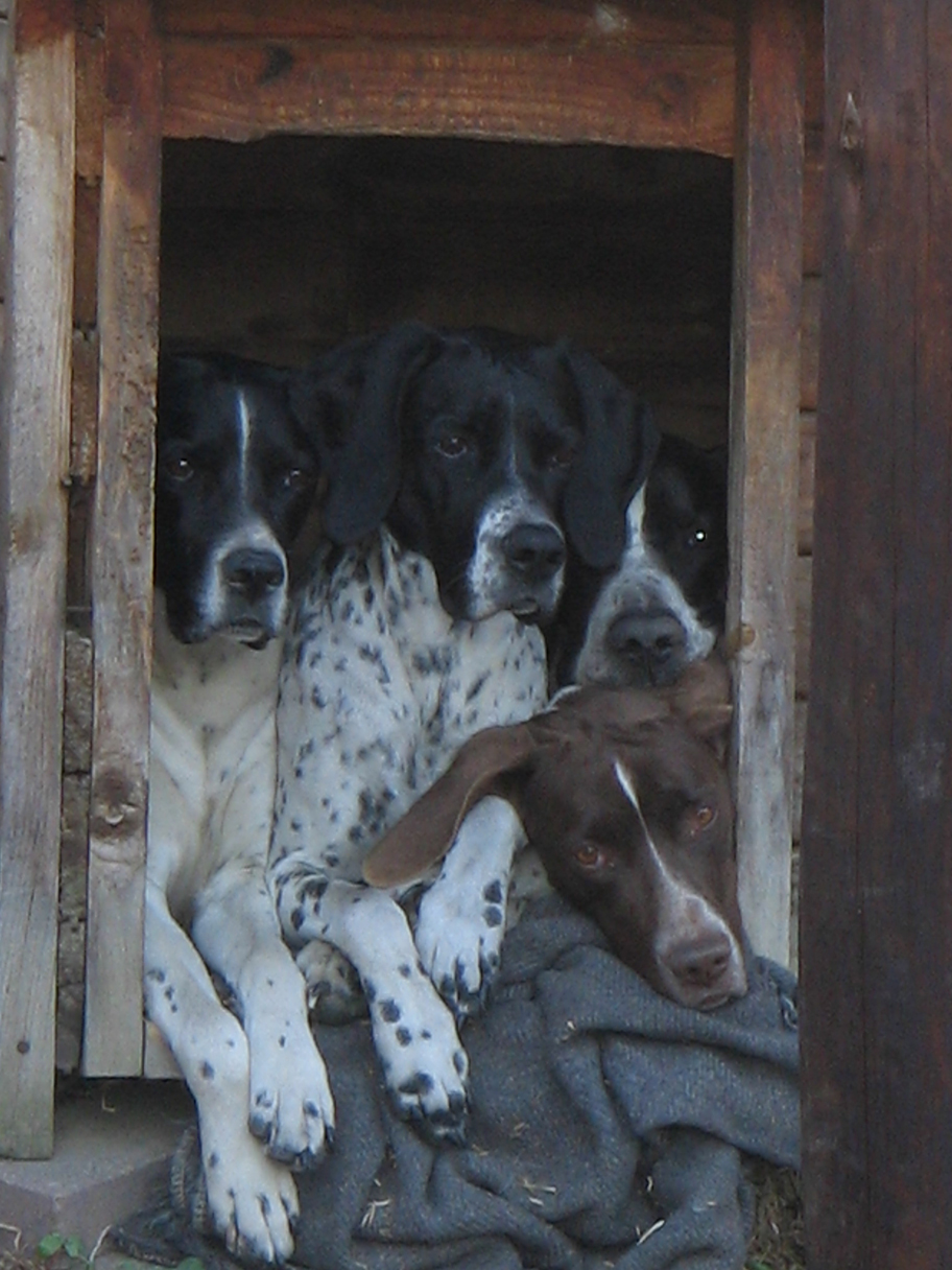 Some of our Pointer dog team © Tim Snow